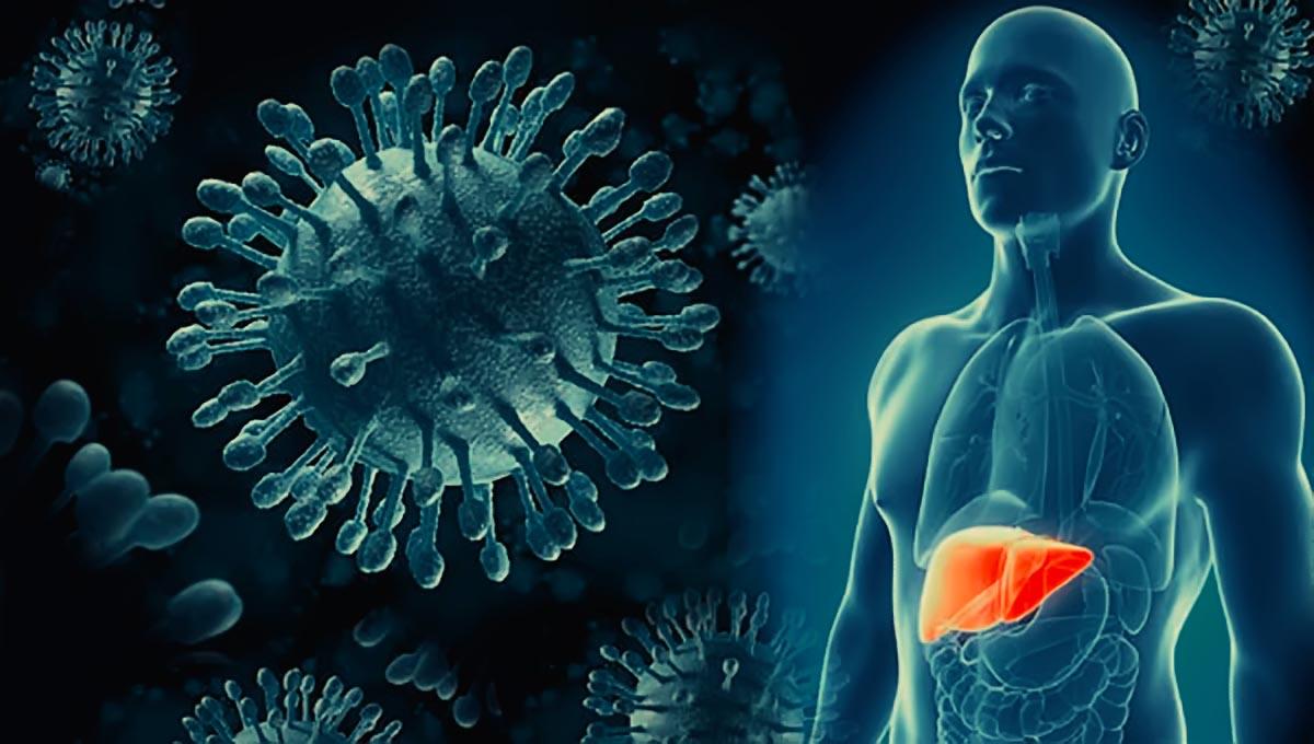 Пути передачи Гепатитов и их симптомы